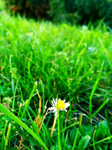 Taking Photos Check This Out Onlyone Photography In Motion Photo Nature Flowers