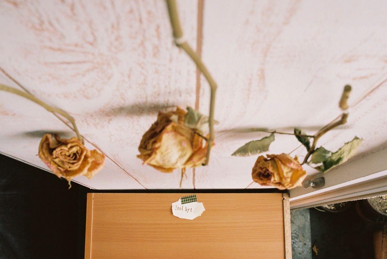 Beautiful stock photos of goodbye, Close-Up, Closed, Communication, Day