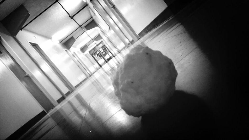 """my new friend """"Snowball"""" :)"""