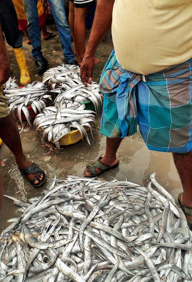 Fish For Sale Fish Market Bhau Cha Dhakka Princess Docks Mumbai Fish