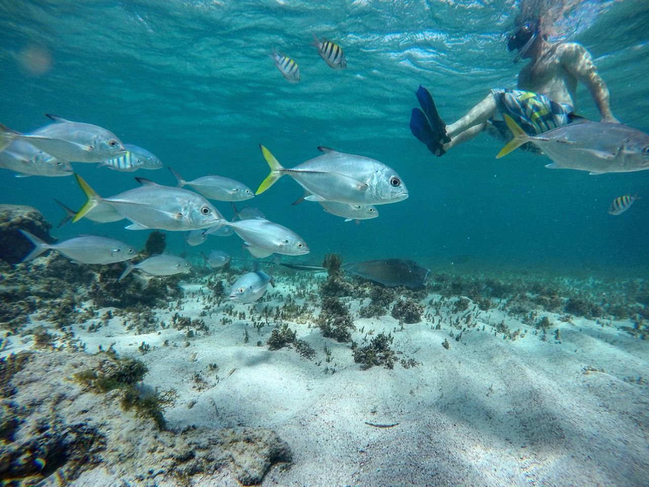 water, sea, swimming, blue, sea life, animal themes, animals in the wild, underwater, fish, wildlife, flying, nature, undersea, high angle view, beauty in nature, medium group of animals, day, sunlight, outdoors