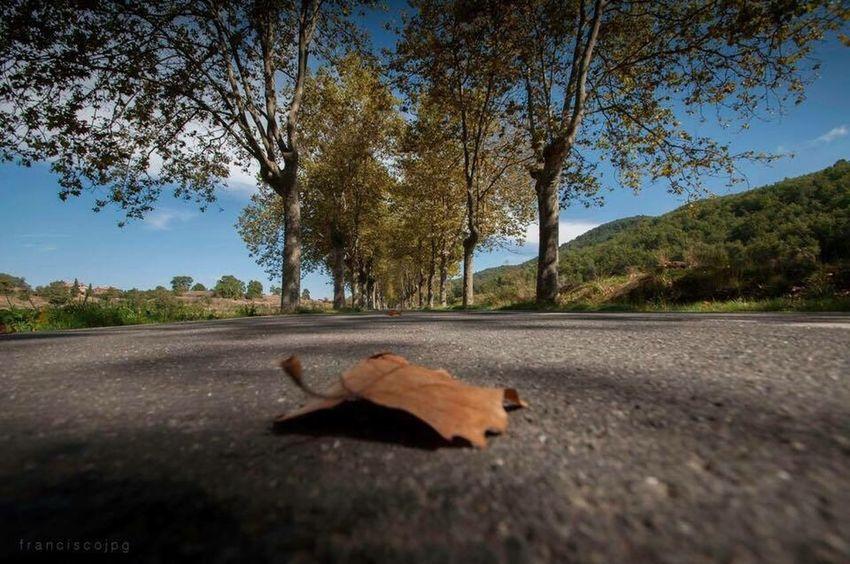 Franciscojpg Paisaje Otoño carretera
