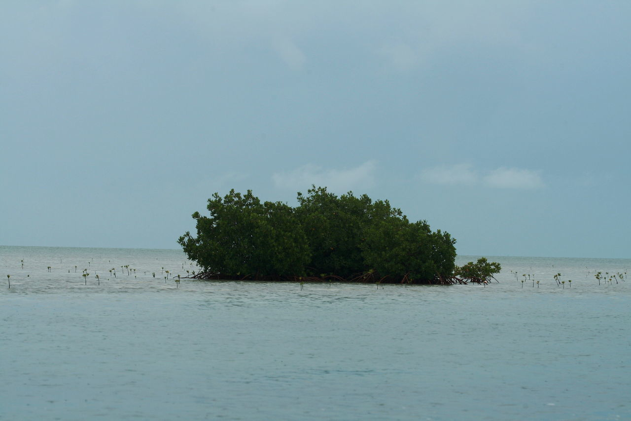 2010 Cayo Largo Cuba Day Horizon Over Water Mangroves Nature No People Outdoors Sea Sky Water Waterfront