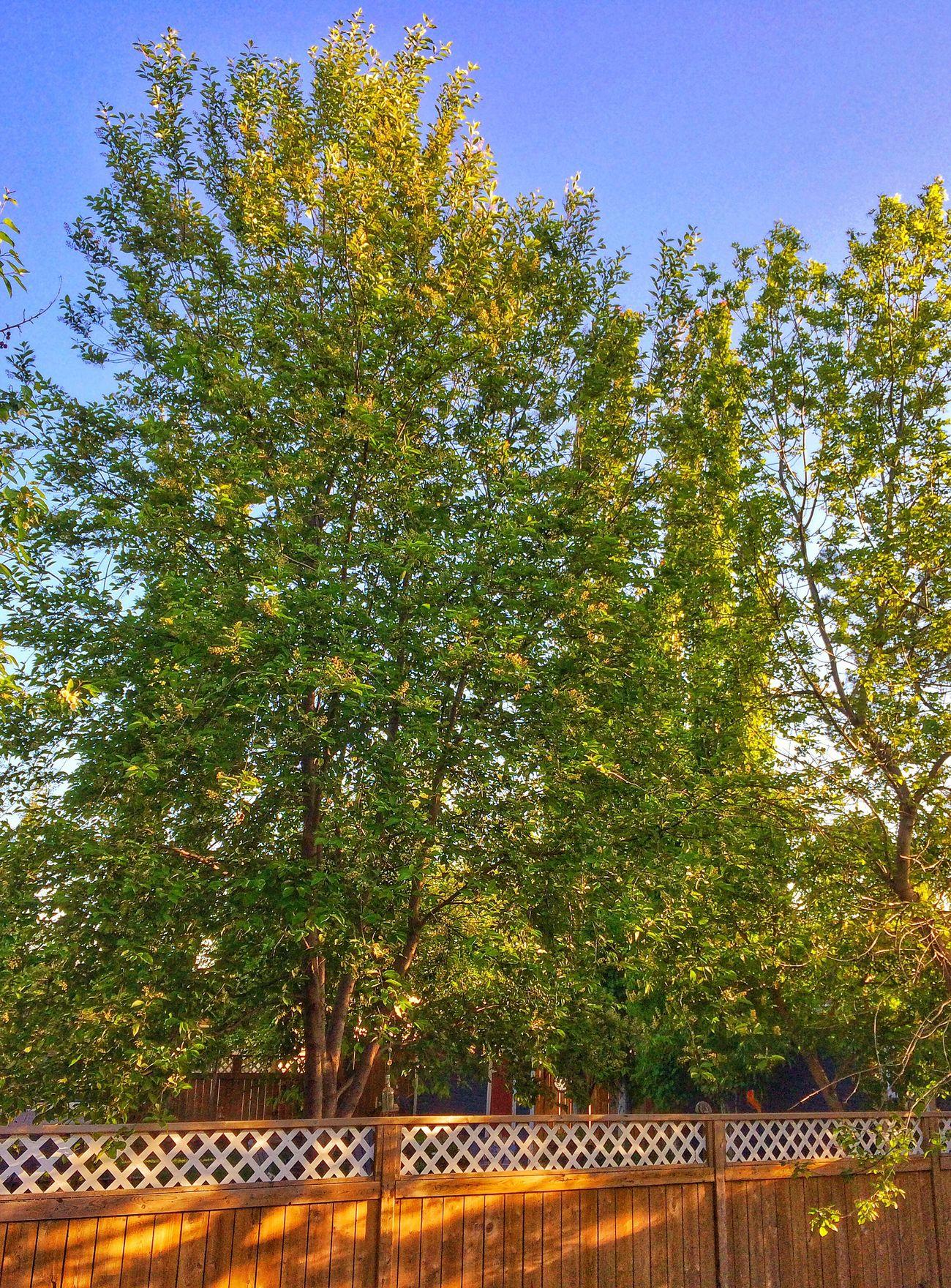 Seasons Nature Tree Back Yard Photography