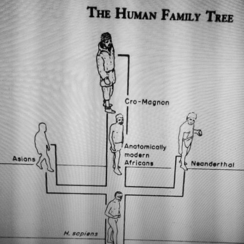When Asians are considered an extinct race who only briefly survived Neanderthals. Archaeology Learnsomethingneweveryday