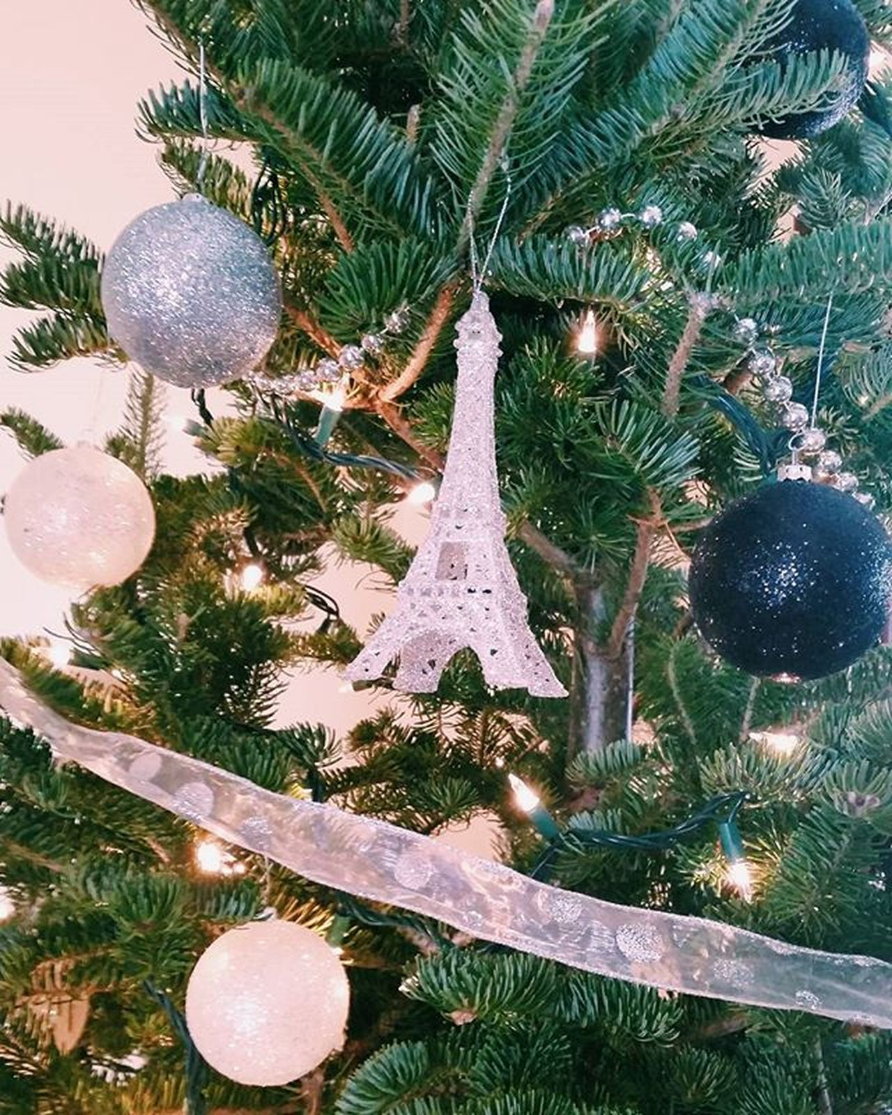 Last picture of the Christmas tree, I swear! I took it this morning so the natural light hit the tree so elegantly and the picture came out clear! 😚 Christmas ABMLifeIsColorful Newengland Thatsdarling Liveauthentic Pursuepretty Postitfortheaesthetic Flashesofdelight Livethelittlethings Christmas Thehappynow Savoryourseason Ornaments Christmastree Solovelysofree Chooselovely Agameoftones Sparkly Silver