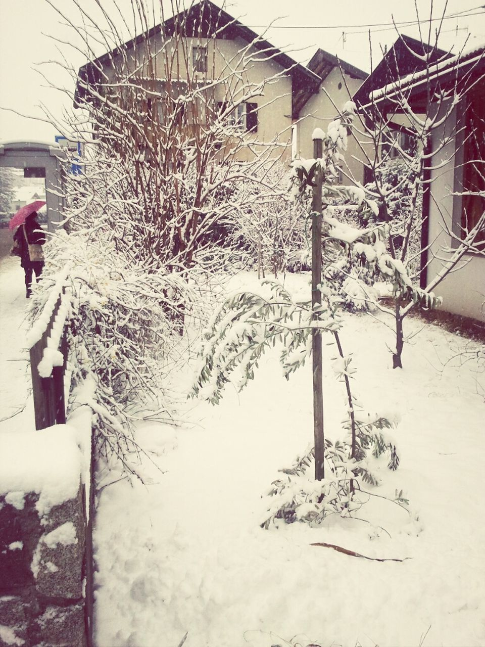 winter, snow, cold temperature, weather, frozen, bare tree, outdoors, day, building exterior, built structure, architecture, nature, real people, tree