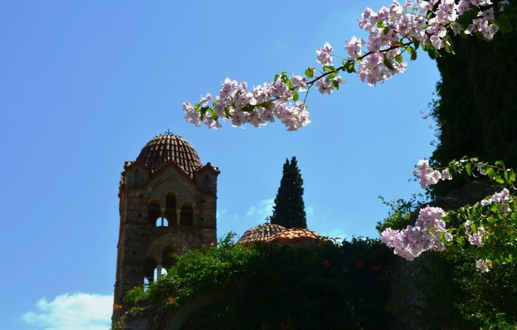Mystras, aspect Architecture Beauty In Nature Blossom Church Clear Sky Flower Low Angle View Monastery Mystras No People Orthodox Church Outdoors Sky Telling Stories Differently Travel Destinations The Great Outdoors - 2016 EyeEm Awards Hidden Gems  Colour Of Life