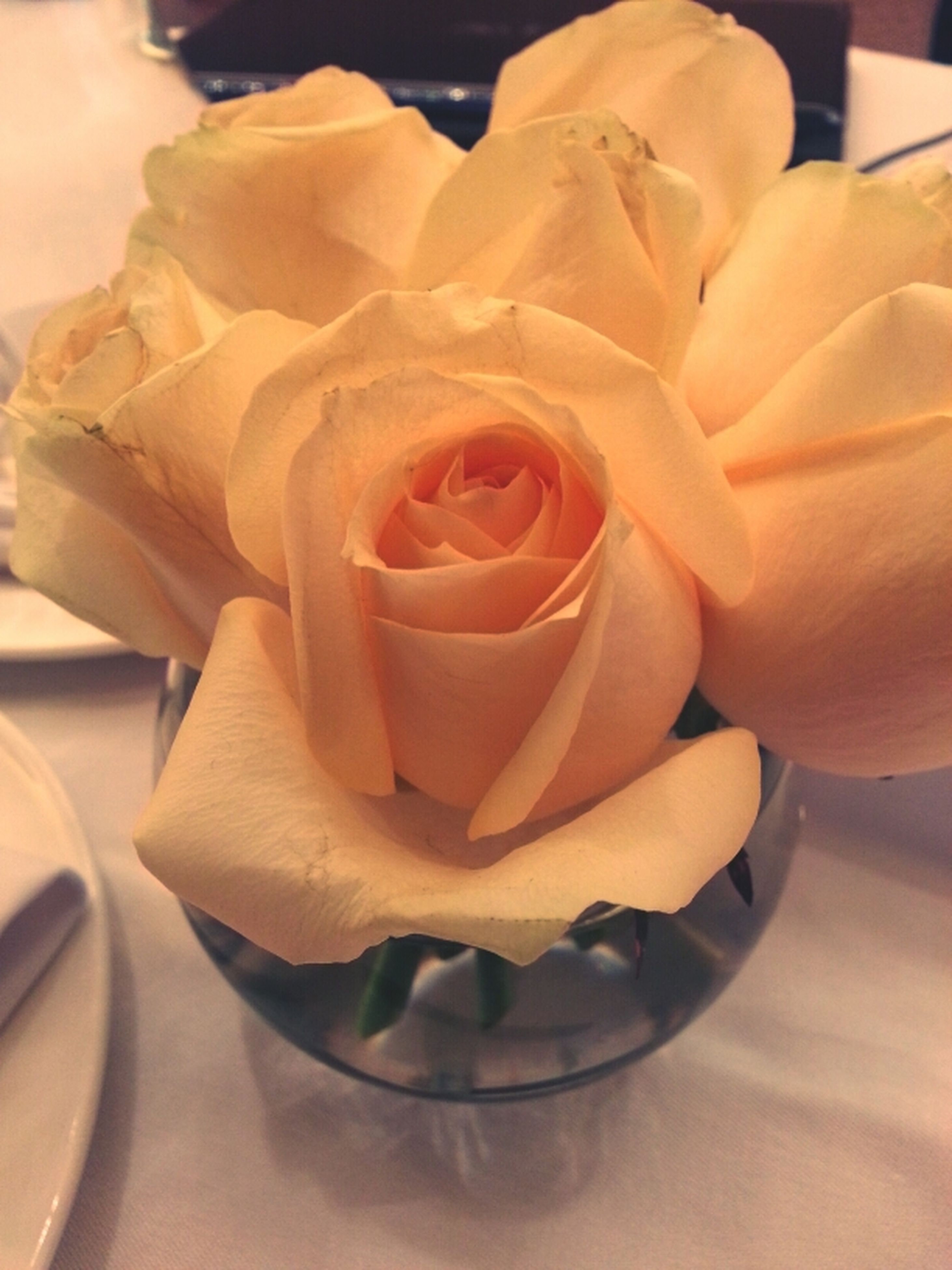 flower, indoors, freshness, petal, rose - flower, flower head, close-up, fragility, vase, table, rose, beauty in nature, still life, no people, single flower, high angle view, focus on foreground, decoration, nature, yellow