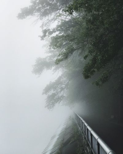 Fog Mist Nature Weather Railing Water Tree Day No People Outdoors Beauty In Nature Scenics Sky Highland Park Reservoir