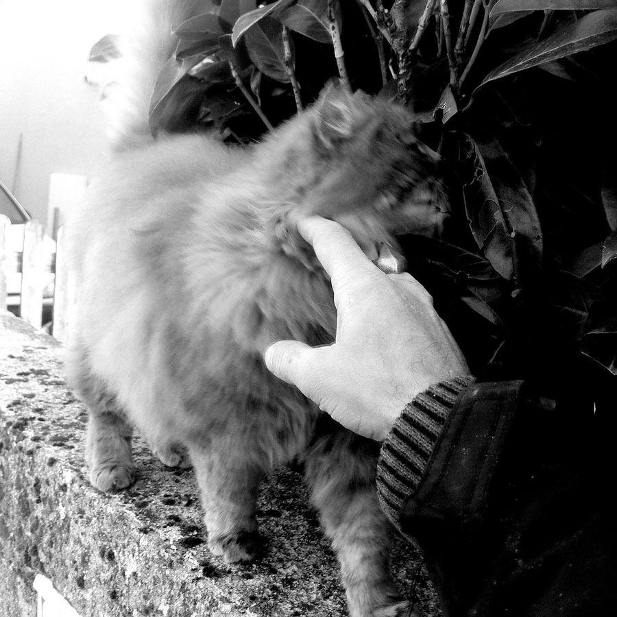 Cat Streetphotography Caresses