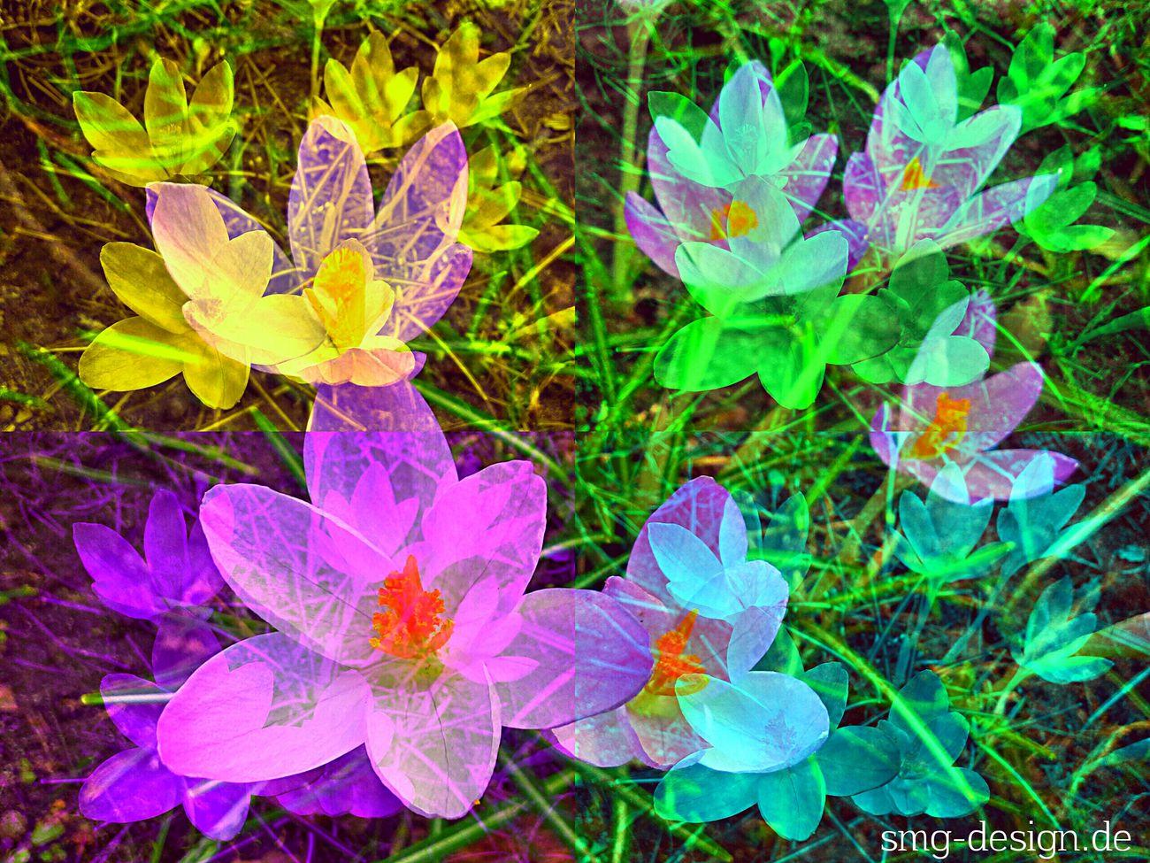 Creative Power Popular Photos EyeEm Nature Lover EyeEm Best Edits we love Flowers, Nature and beautiful Design www.smg-design.de