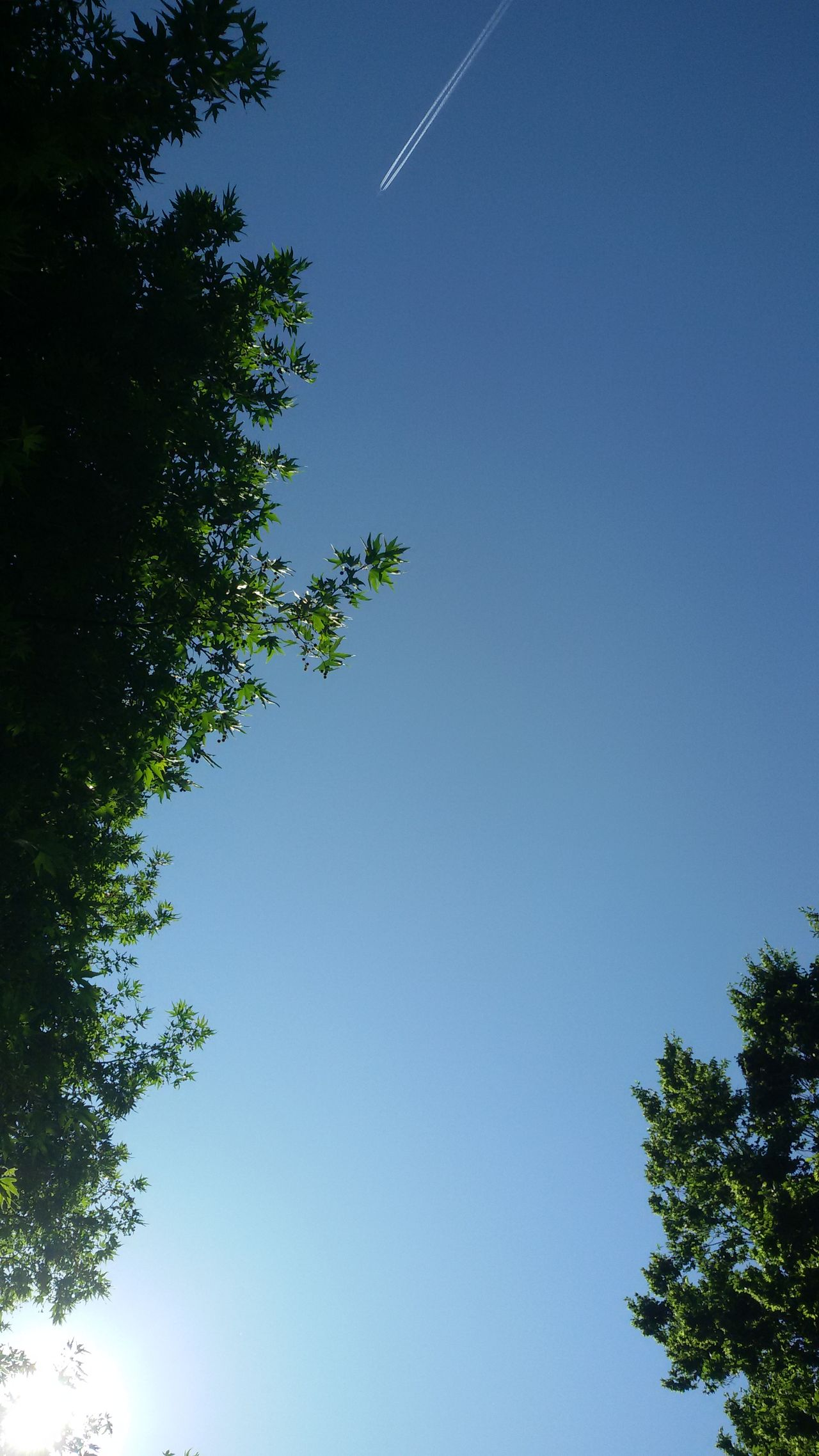 The sky. Sky Blue Nature Clear Sky Airplane Jet Trees Leaves Light Angle