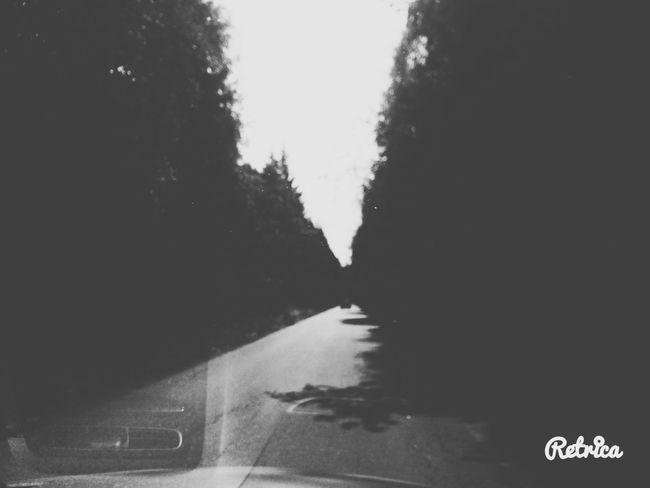 Дорога влесу Лес Лес🙈