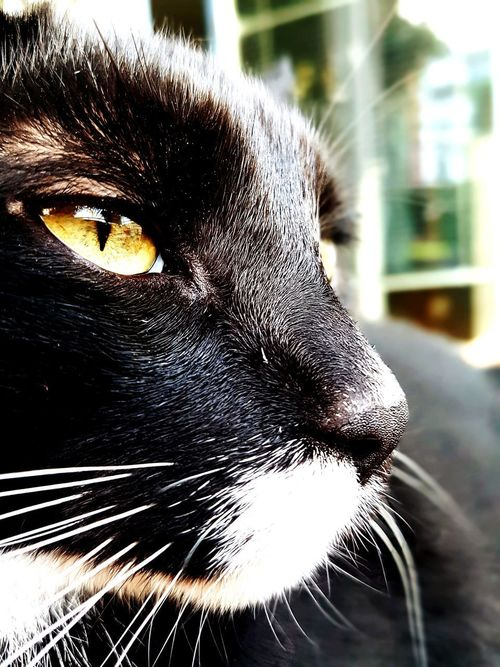 One Animal Domestic Cat Pets Domestic Animals Portrait Feline Animal Themes No People Mammal Black Color Looking At Camera Kitty Kater Meow Katze Katzenfoto Cute Stinker Niederneuendorf