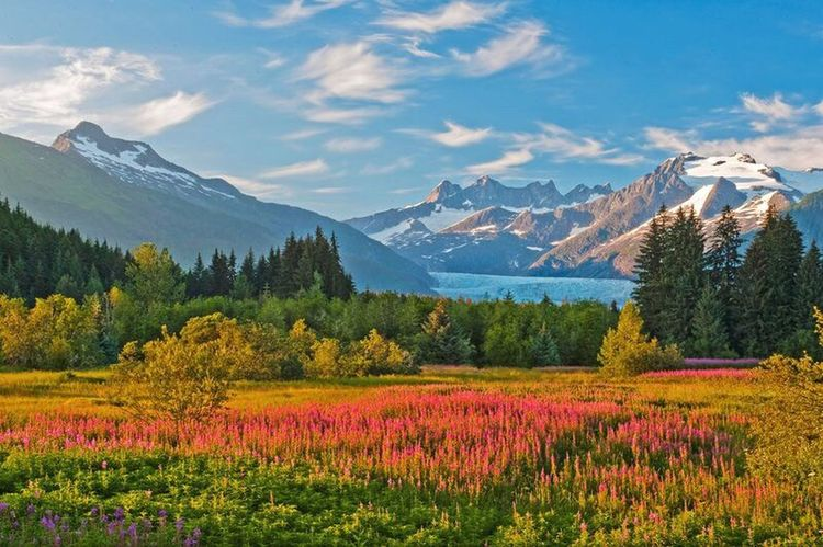 Flower Mountain Landscape Blue Springtime Plant Sky Outdoors