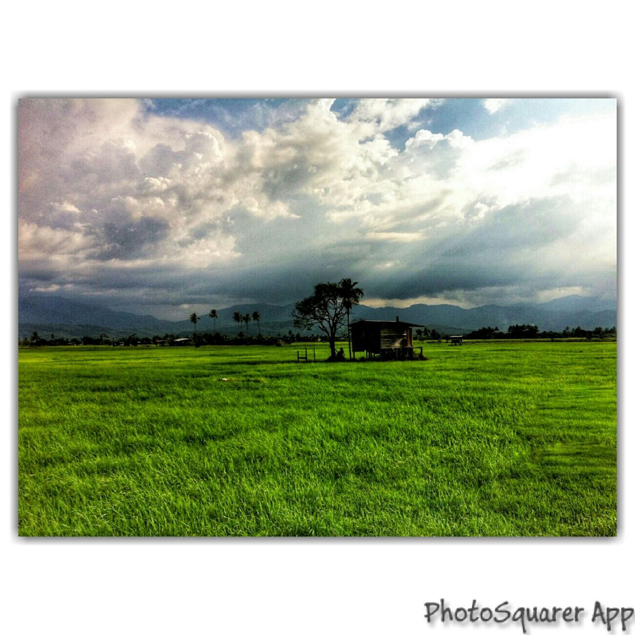 I know distance doesnt matter, but you feel so far away. Landscape Taking Photos Enjoying Life Relaxing Check This Out Summer ☀ Paddy Field