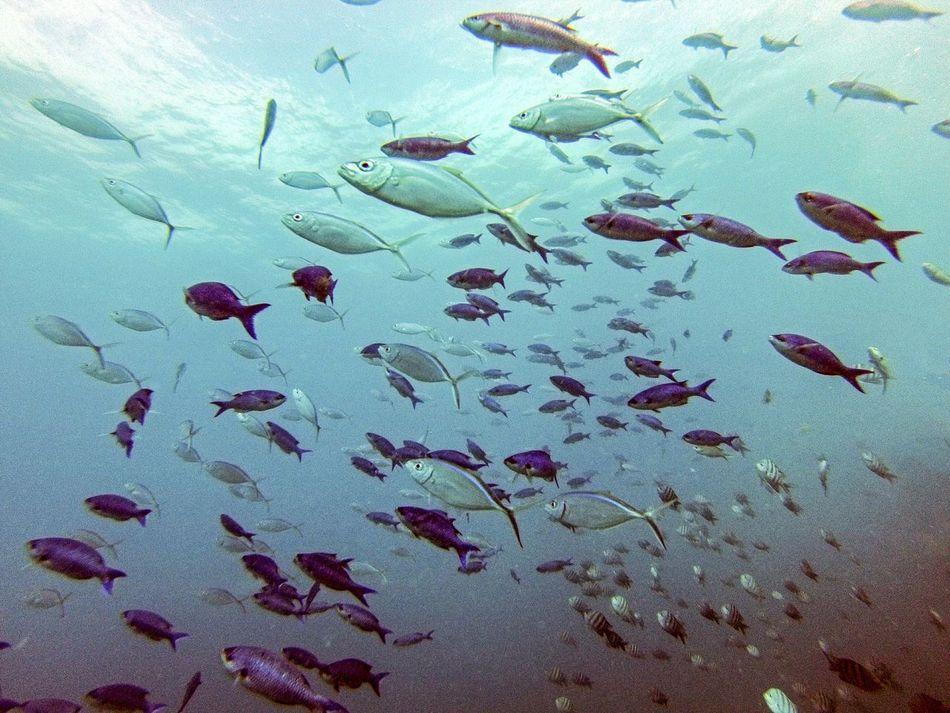 Beautiful stock photos of fish, Animal Themes, Fish, Large Group Of Animals, Nature