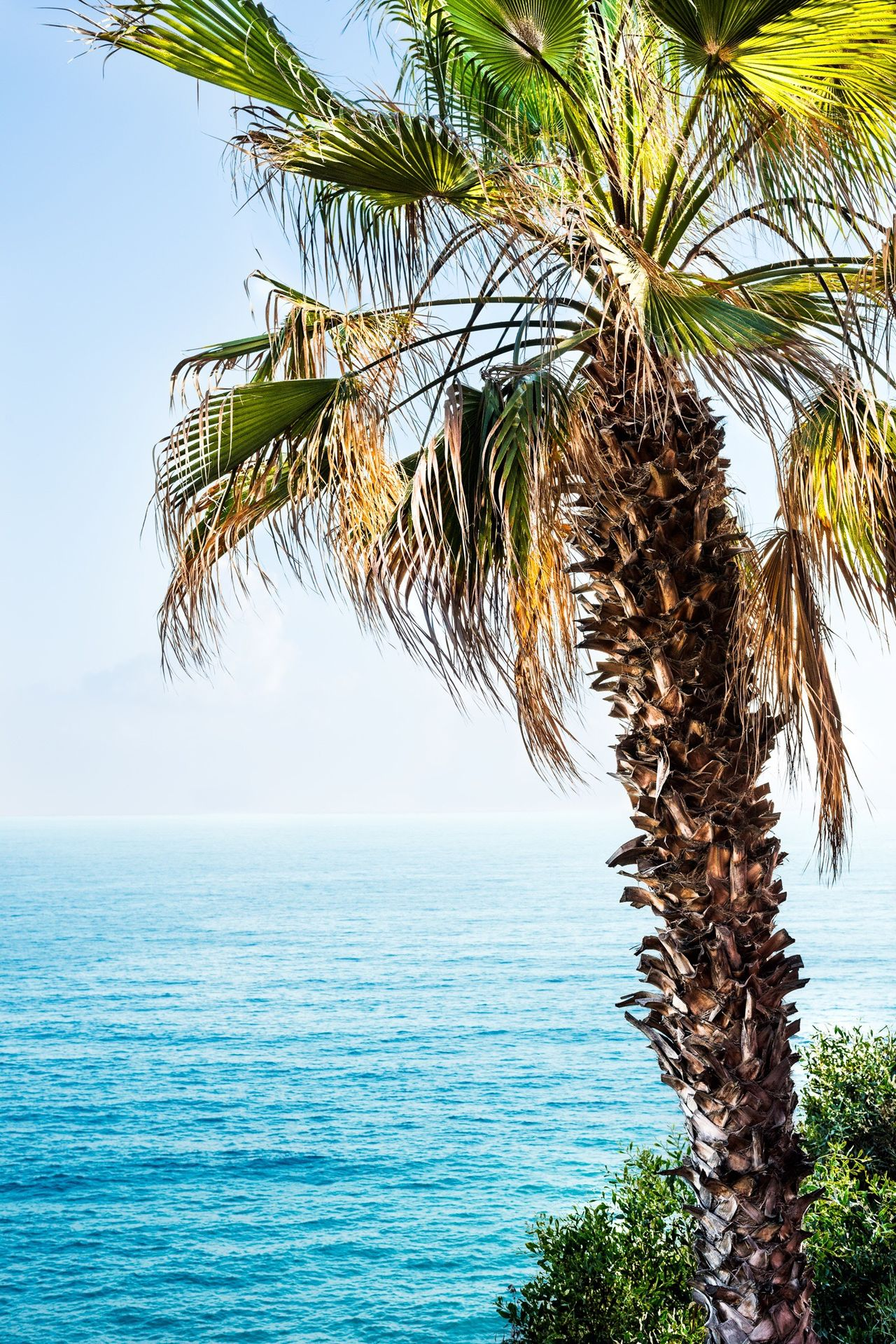 Palmtree with a view Horizon Over Water Sea Nature Palm Tree Scenics Beauty In Nature Outdoors No People Vertical Sky Tree Clear Sky Single Tree Beach Vacations Travel Traveling