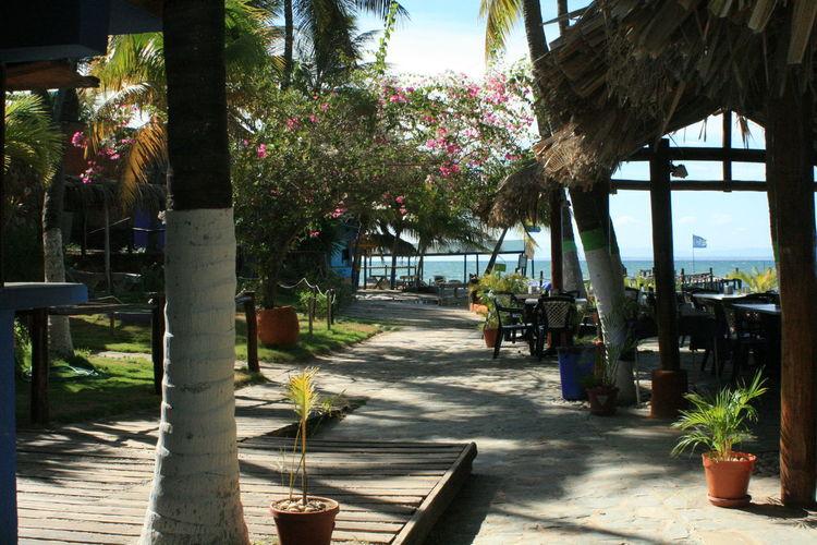 Cafe Carribean Flowers Margarita Island Margarita, Venezuela Tourist Resort Tree Tropical Climate Tropical Paradise Tropical Restoura Playa El Yaque No People