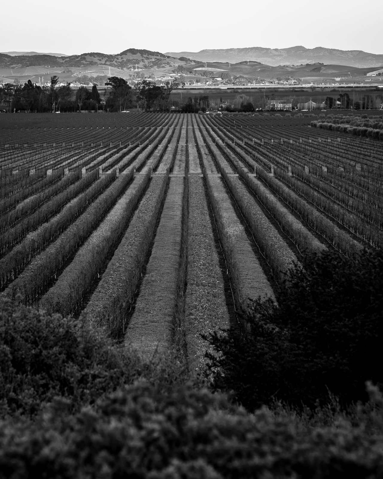 Agriculture Plowed Field Rural Scene Nature Pattern Landscape OutdoorsVineyard Travel EyeEm Nature Lover The Week On EyeEem Winemaking Life Lifestyle tranquil scene Blackandwhite Market Bestsellers 2017