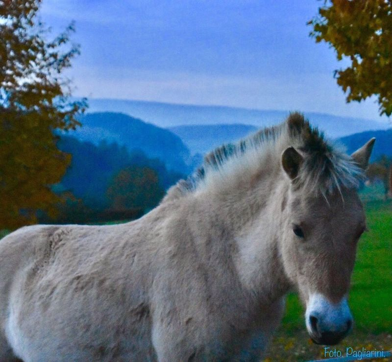 Animal Themes Horses Animals In The Wild Beauty In Nature Animals Nature Photography Nature_collection Landscape Mountain No People Somewhere In Germany 🎬 Irgendwo In Deutschland 🎬 Nature On Your Doorstep Natural Beauty Naturephotography Nature_collection EyeEm Best Shots EyeEm Best Shots - Nature