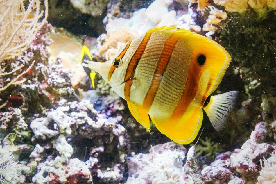 Genoa's aquarium Nature Winter Animal Themes Close-up Cold Temperature No People Snow Sea Life Beauty In Nature Outdoors Day UnderSea Fresh 3 Open Edit Eye4photography  EyeEm Best Shots Aquarium Water Multi Colored Animal Wildlife Tropical Fish Beauty In Nature Animals In The Wild Nature Fish