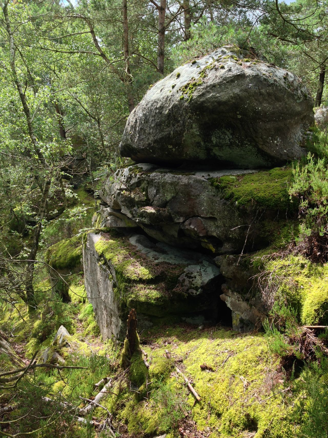 Rock - Object Nature Tranquility Forest Tree Day Outdoors No People Green Color Beauty In Nature Moss Tranquil Scene Growth Scenics