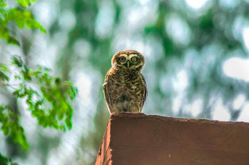 Owl Eyes Owls💕 Owllife