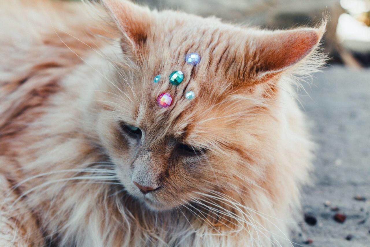 Beautiful stock photos of diamond, Animal Themes, Beauty In Nature, Cat, Close-Up