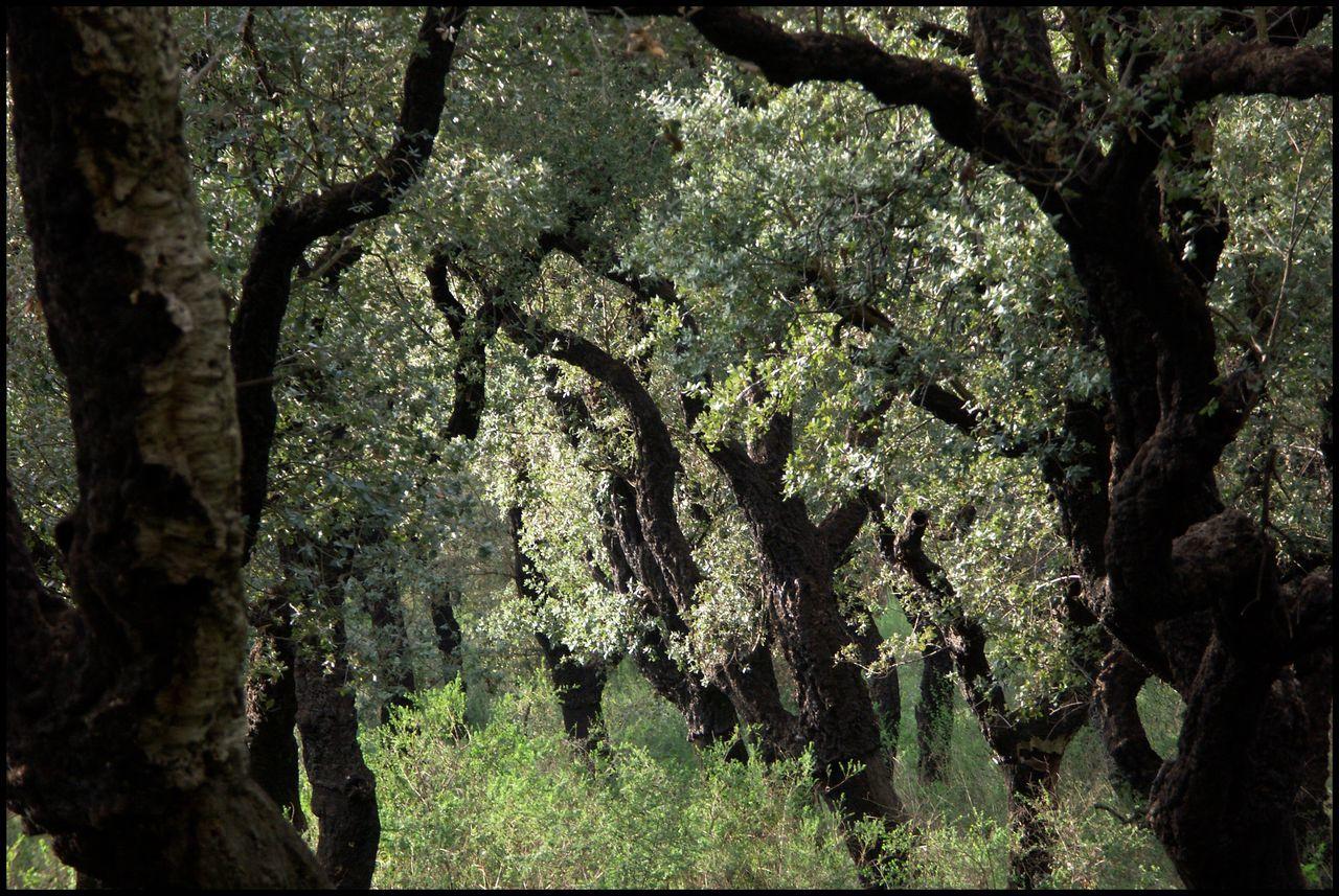 Sughero - die Korkeichenwälder Forest Korkeiche Nature No People Sardegna Sardinia Sardegna Italy  Sardinien Sughero Tree