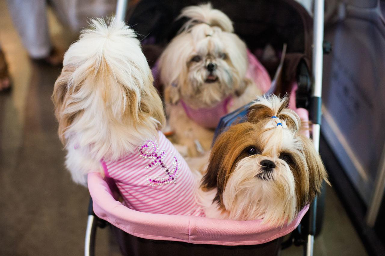 Beautiful stock photos of niedlich, Animal Themes, Baby Stroller, Dog, Domestic Animals