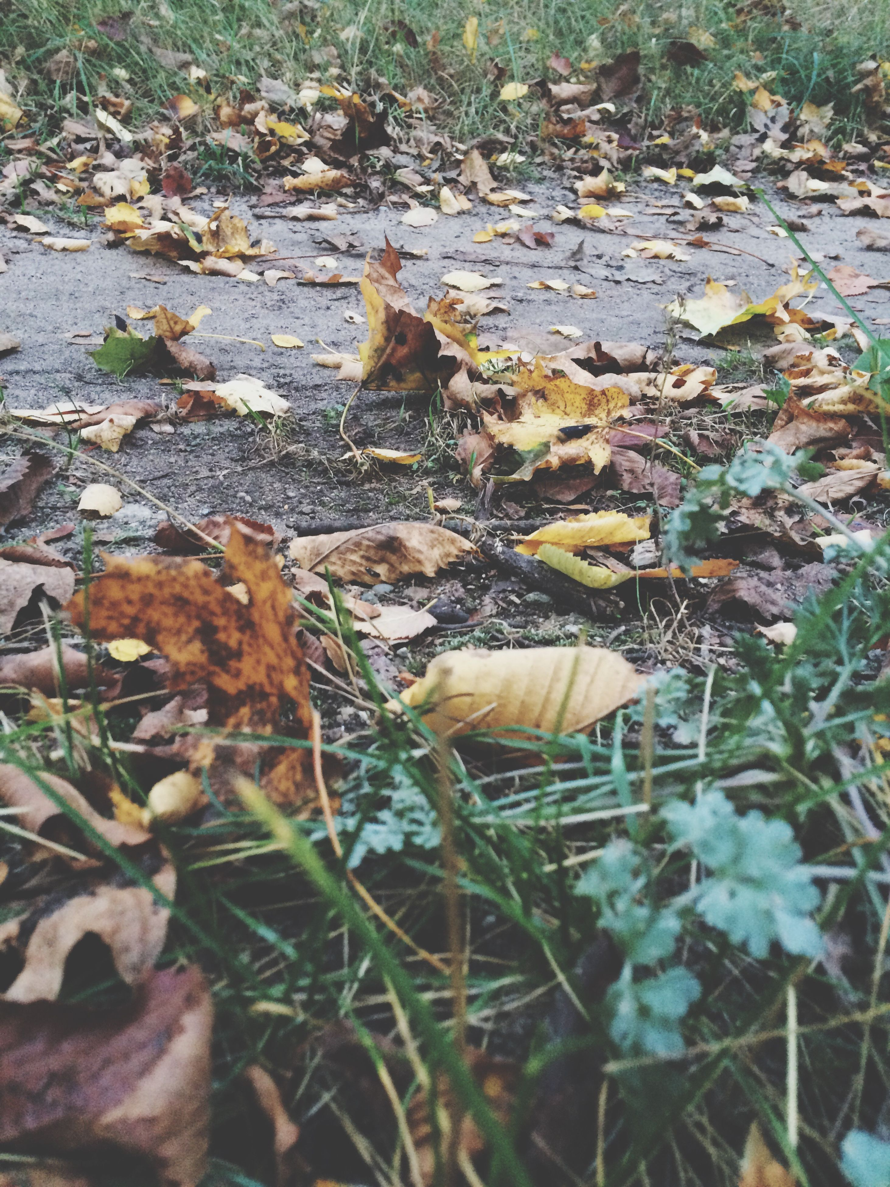 leaf, autumn, change, season, dry, fallen leaf, high angle view, leaves, field, nature, tranquility, fallen, natural condition, abundance, day, fragility, moss, non-urban scene, beauty in nature, outdoors, scenics, dried plant, land, messy, tranquil scene, contrasts