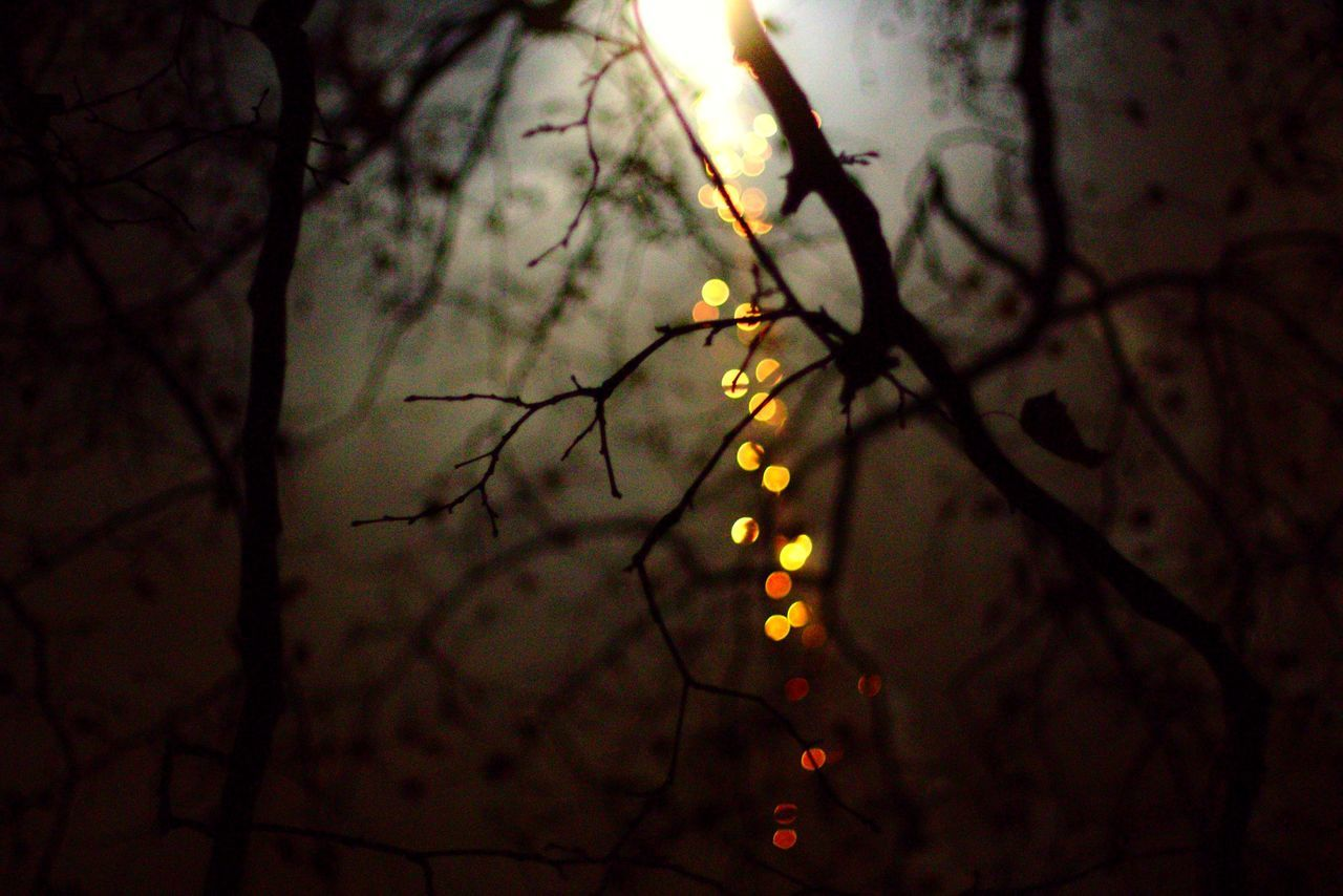 Limbo Low Angle View Close-up Illuminated Sky Nature Berlin Fireworks Trees Silhouette EyeEm Best Shots Lights Twigs