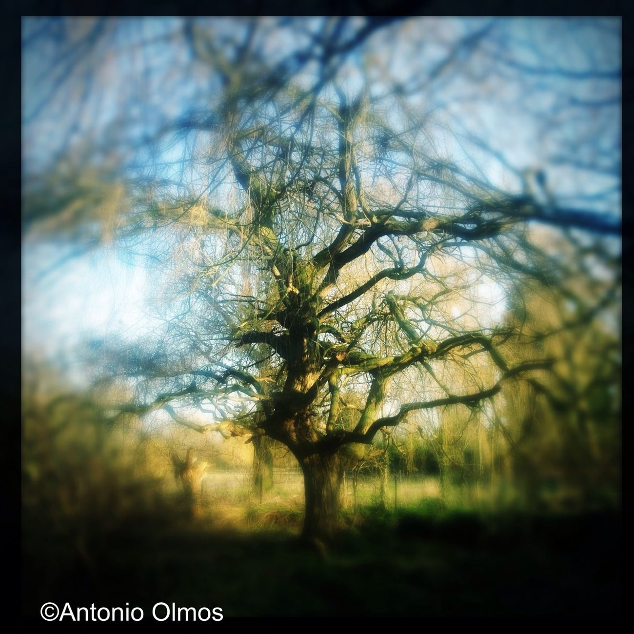 My favourite tree. With smaller watermark.