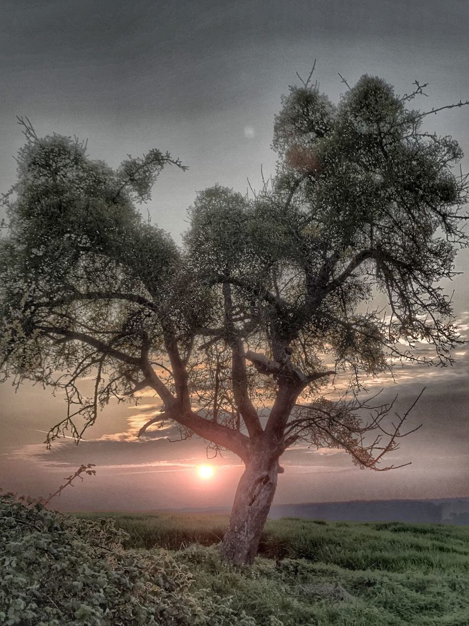 Tree Beauty In Nature Sun Nature No People Sky Tranquility Scenics Outdoors Tranquil Scene Branch Field Sunset Fog Landscape Bare Tree Illuminated Rural Scene Grass