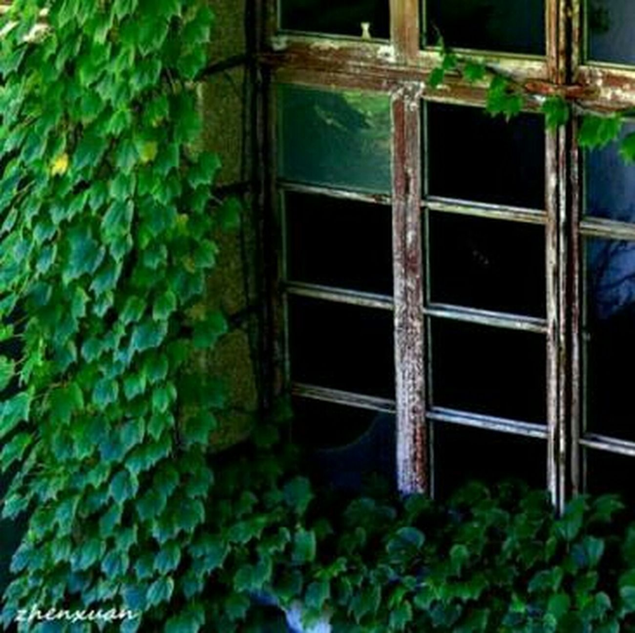 Sabzevar Cheese! Nature Huggingatree