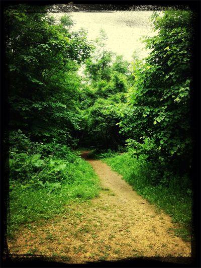 Abfahrt Mountain Biking Single Trail