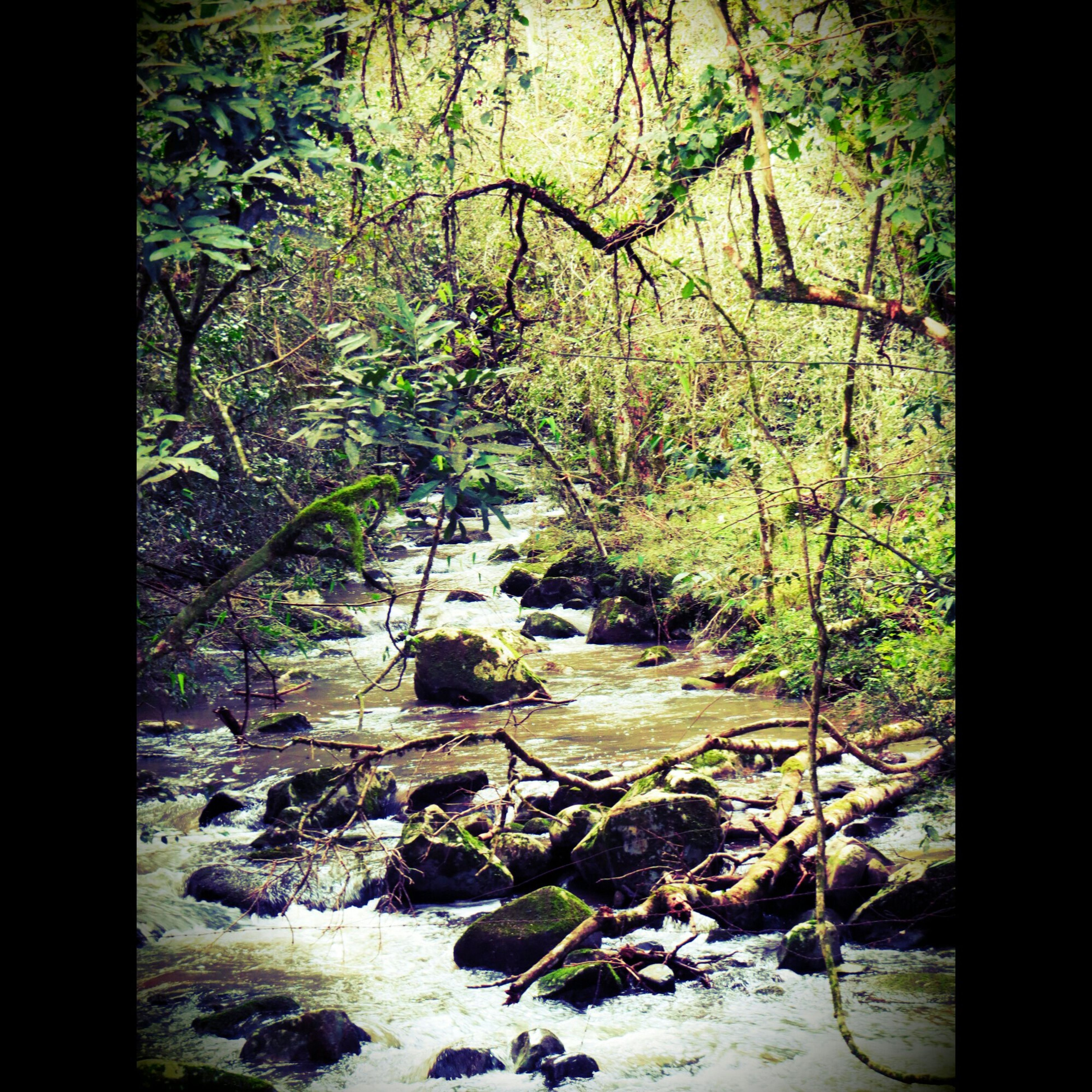 tree, forest, stream, tranquility, tranquil scene, nature, rock - object, beauty in nature, scenics, water, growth, plant, auto post production filter, day, non-urban scene, non urban scene, rock, green color, no people, transfer print