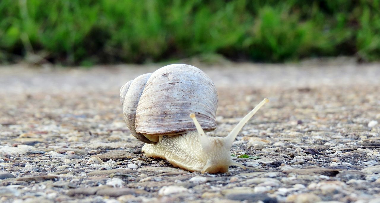 Vineyard Snail On The Way Snail Nature Photography Close Up Nature In Details Nature Macro Nature On My Doorstep