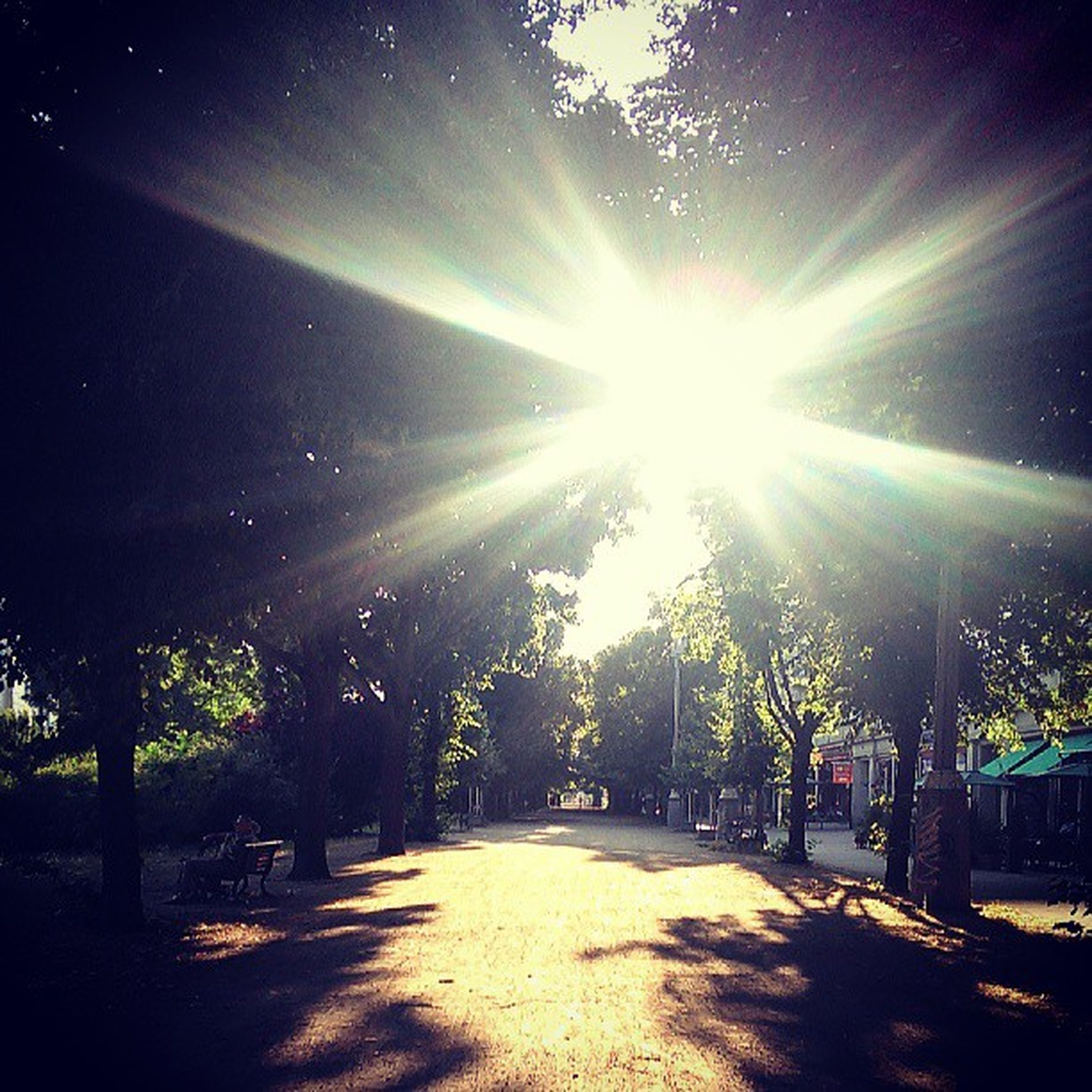 sun, sunlight, tree, sunbeam, lens flare, tranquility, the way forward, sunny, sky, nature, shadow, tranquil scene, road, beauty in nature, bright, scenics, landscape, growth, street, day