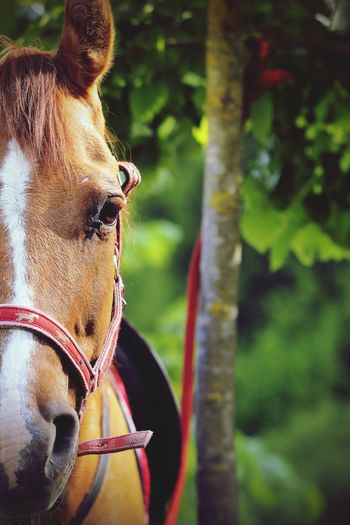 Horse Equestrian Equestrian Sport Horse Photography  Animal Animal Photography Westernriding Equine Photography