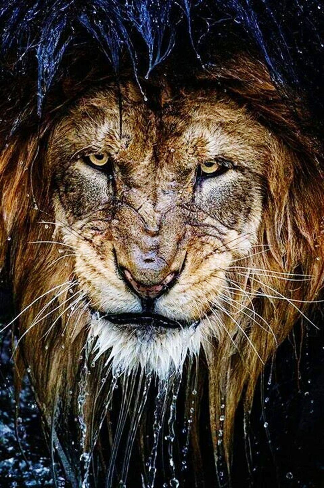 Hi! My Life ❤ سأصبر على ضلم الجميع ولاكن عندما يأتي دوري لن أرحم أحدا Lion Atlasً
