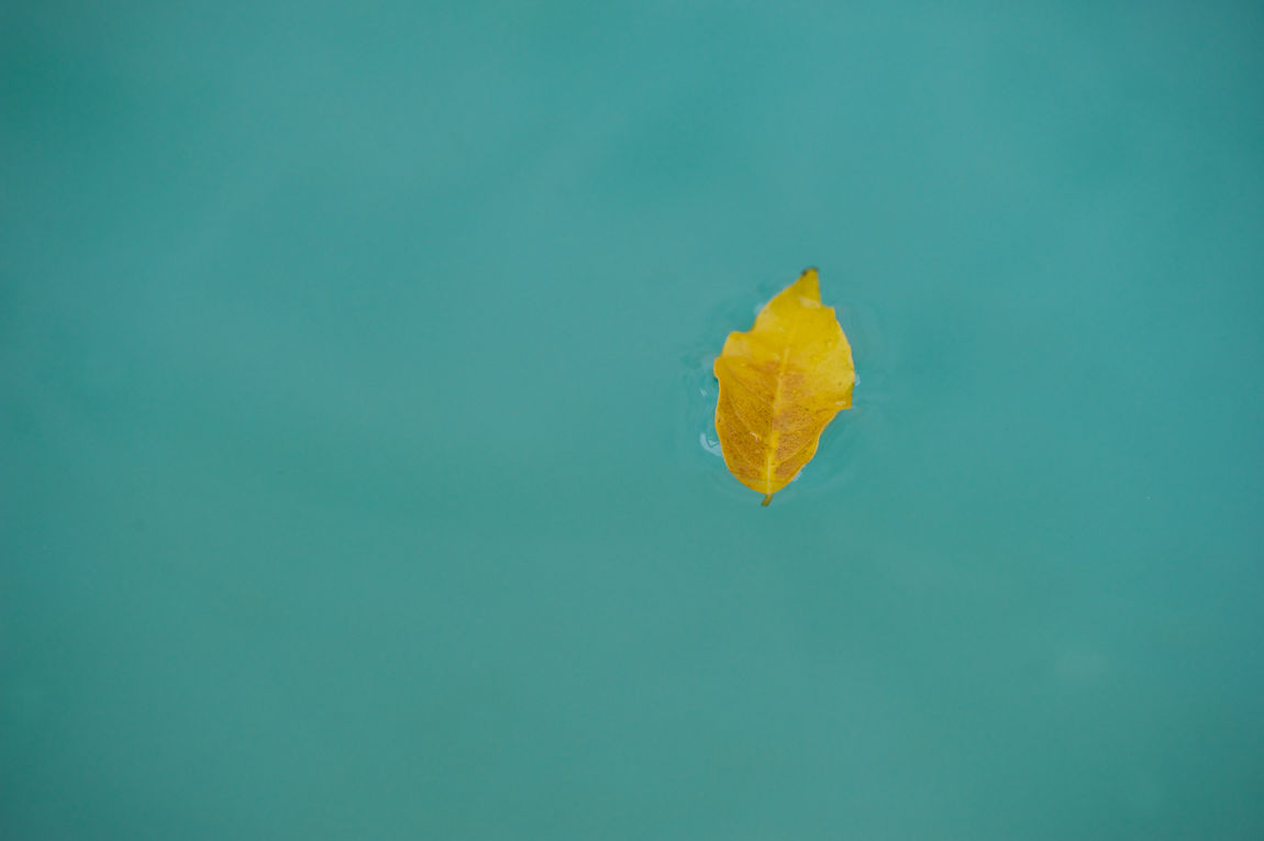 yellow in the blu Blu Colour Of Autumn Colour Of Nature Glance Leaf Minimal Nature Nature Photography Suspended Trieste Water Yellow Color