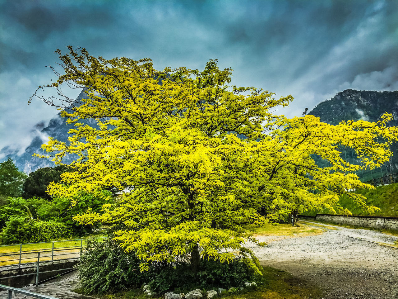 tree, yellow, sky, cloud - sky, nature, growth, day, outdoors, beauty in nature, no people, green color, scenics, plant