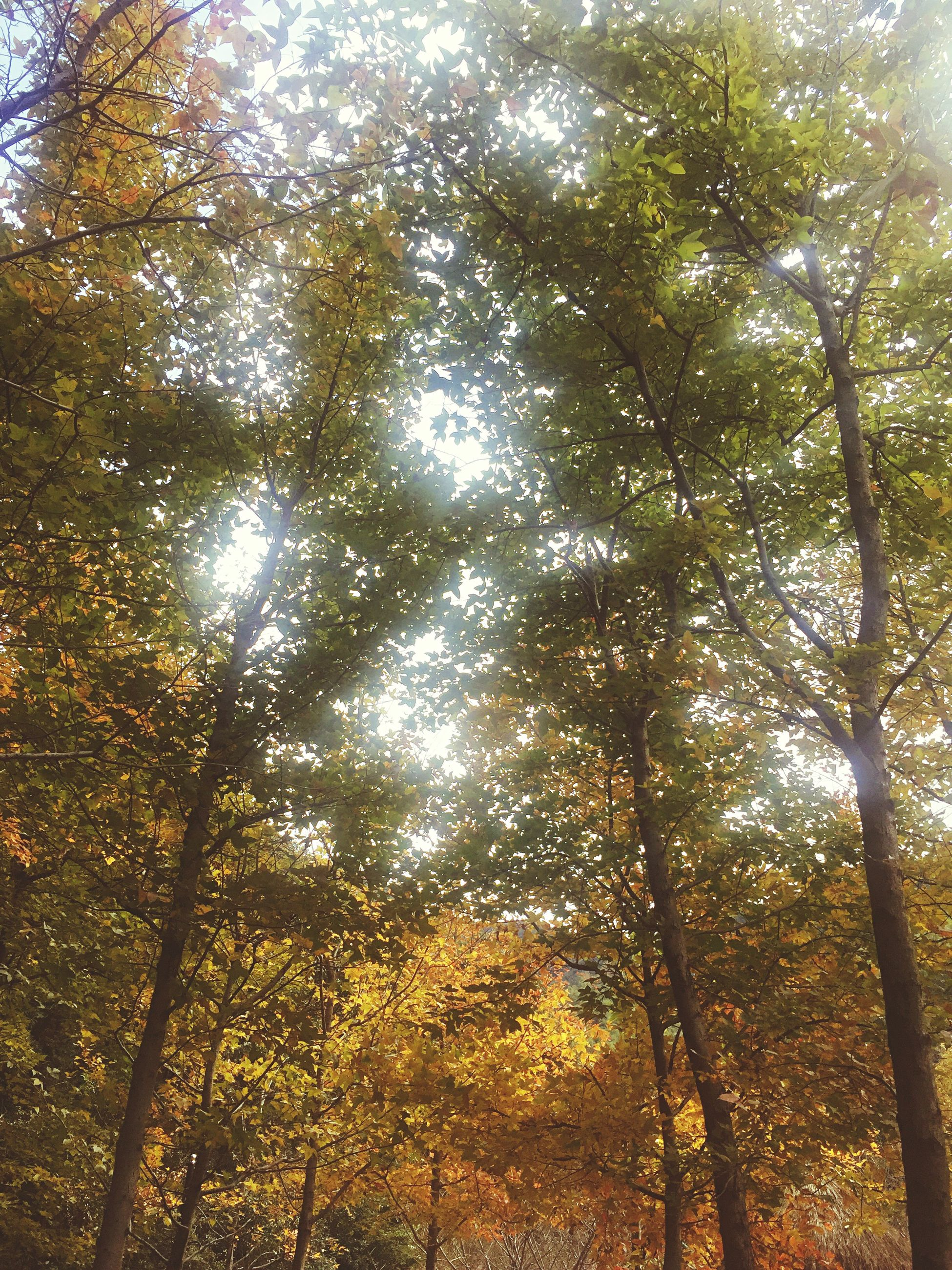 low angle view, tree, nature, growth, beauty in nature, no people, sky, tranquility, outdoors, scenics, backgrounds, day