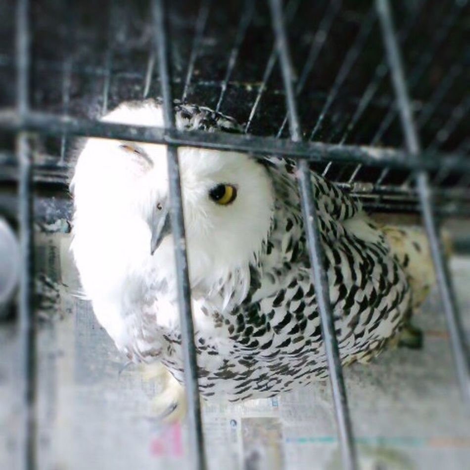 ウインクふくろう♡ Owl Owl Eyes Owl Photography One Animal Bird Cage Close-up Wink Wink Wink ;)  KAWAII Tadaa Community Hello World
