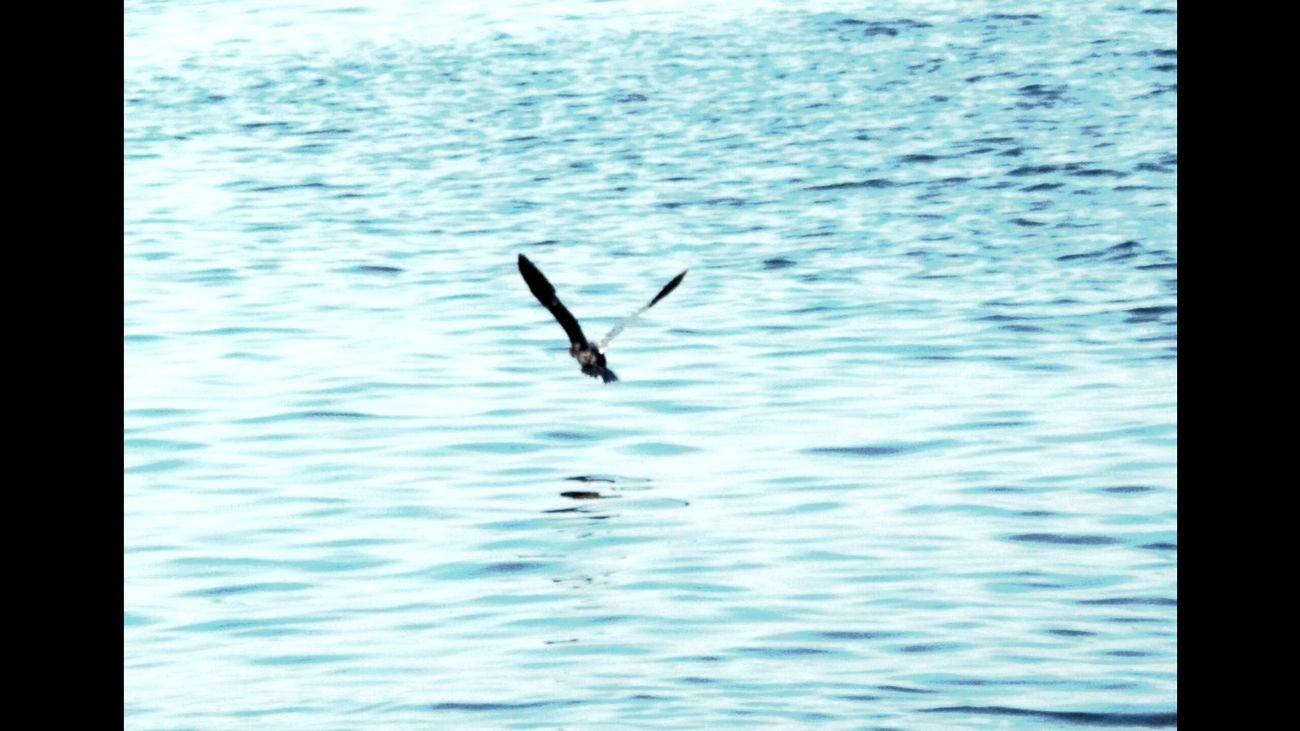 Animal Themes Flying Sea One Animal Bird Water Nature Waterfront Spread Wings Day Outdoors Beauty In Nature No People EyeEmNewHere Water Color.İzmir Türkiye Seascape Blue Seagull Seagull And Sea