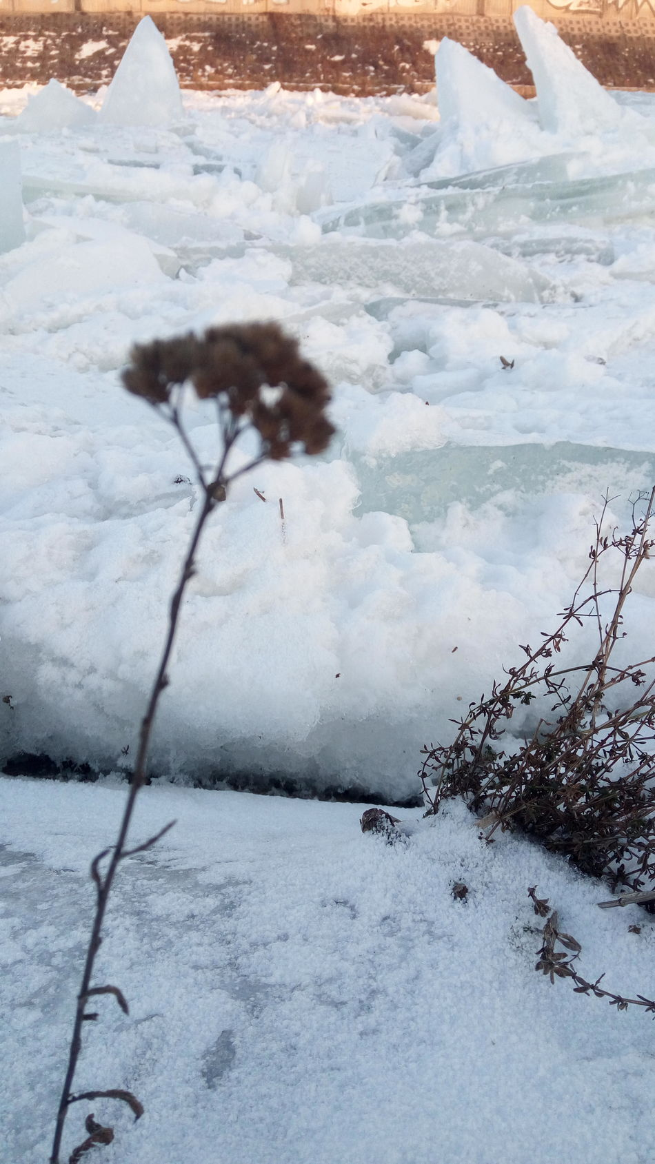 Winter Cold Temperature Day Beauty In Nature Outdoorsiced Power Of Nature No People Focus On Background FocusOn Iced River ❄