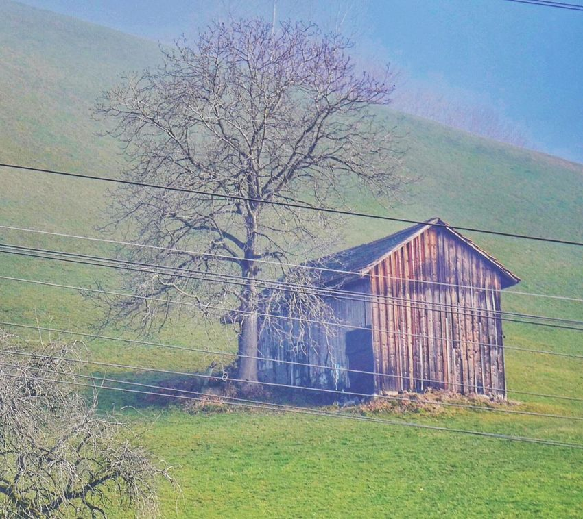 House Grass Landscape Tree Field Architecture No People Nature Outdoors Sky Day Foggy Wintertime Switzerland Swiss Landscape Beauty In Nature Grass Electricity Pylon Tranquil Scene Tranquility Electricity  Cable Power Line